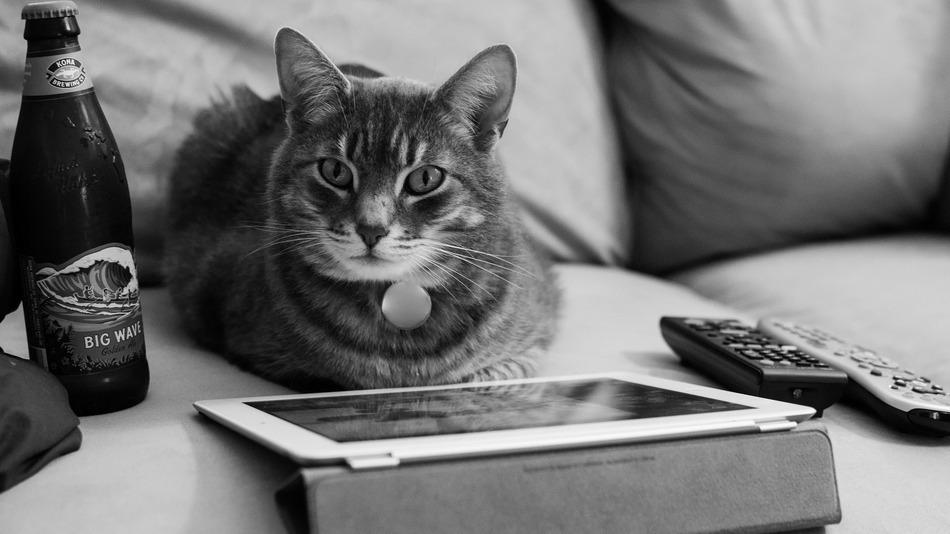 cat with iPad