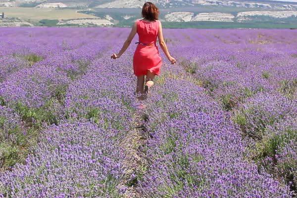 woman lavender field
